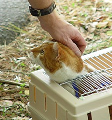 petting a cathead in a box