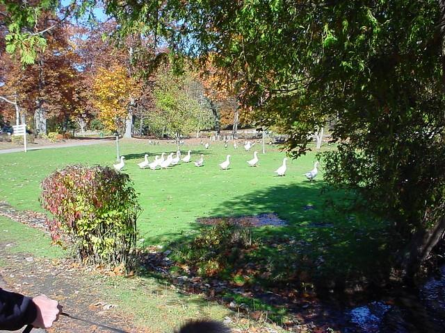 Milham Park. Kalamazoo, MI