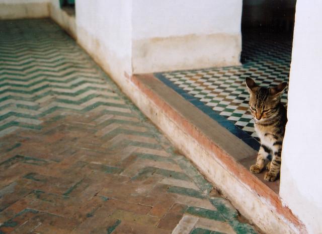 earcat