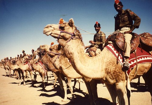 india rajasthan camel corp