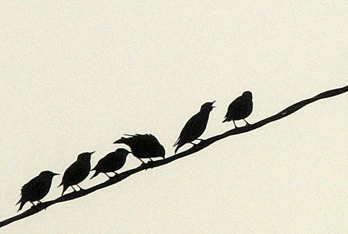 fog birds telephone wire close