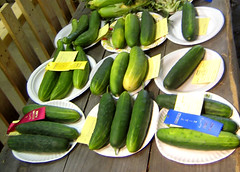flower(0.0), plant(0.0), dish(0.0), cucurbita(0.0), vegetable(1.0), summer squash(1.0), green(1.0), produce(1.0), food(1.0), cucumber(1.0), gourd(1.0),