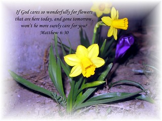 God's Flowers by Through Joanne's eye