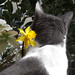 The cat and the flower