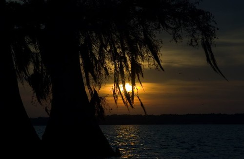 sunset through the cypress