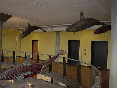dolphins in the lobby..