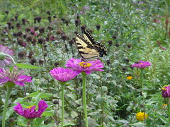 Butterfly and flowers at Mount Vernon
