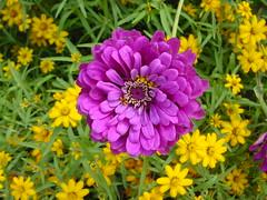 Flower from Gardens at Mount Vernon