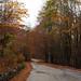 Mt. Sirino – Autumn road