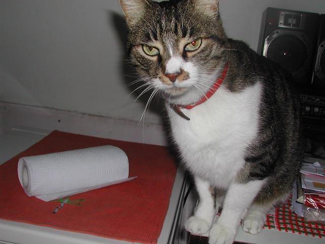 Misty, Evil Cyborg Cat