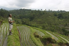agriculture, farm, field, soil, hill, paddy field, plateau, terrace, crop, landscape, rural area, grassland, plantation,
