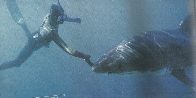 Diver & Great White Shark
