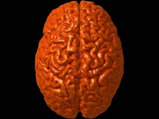 Скани мозку розкажуть про ваш вік
