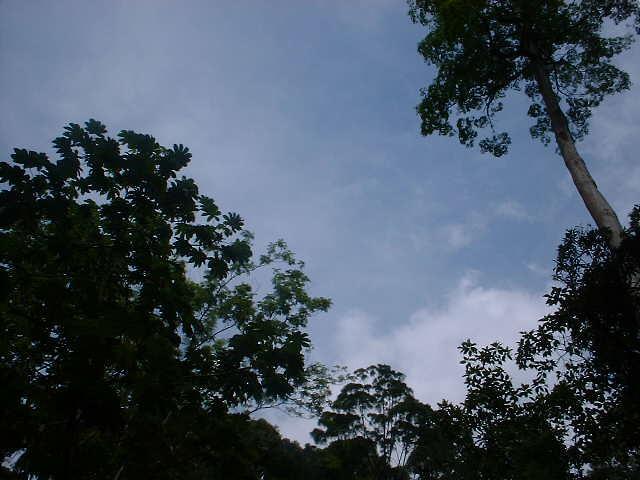 Frim canopy, Fujifilm MX-1200