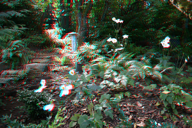 3d flowers in my back garden flickr photo sharing for My garden 3d