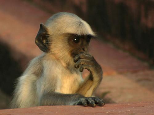 考えるお猿さん - 無料写真検索fotoq