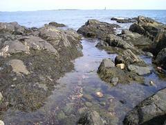 portland seaweed