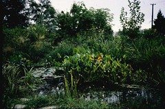 Established pond