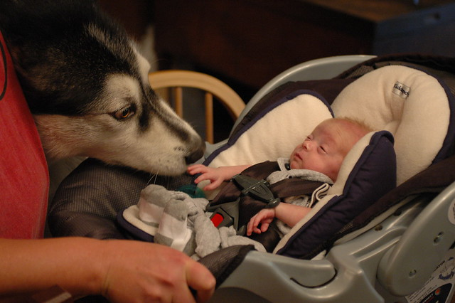 day 96: odin unexpectedly meets mauja!