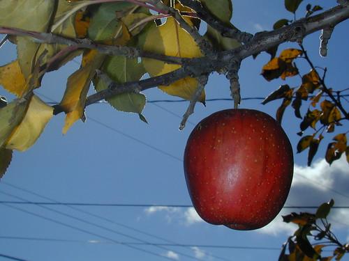 Dwarf fruit tree care garden guides - Planting fruit trees in the fall a garden full of vigor ...