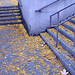 Stairs & Leaves