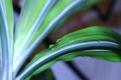 Drop on a leaf