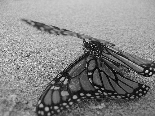 butterfly on beach