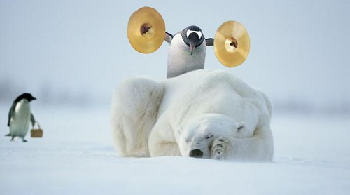 Penguin SEO Update image courtesy of cnystrom on Flickr