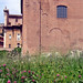 forum: curia across field
