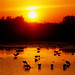 sunset with birds by slight clutter