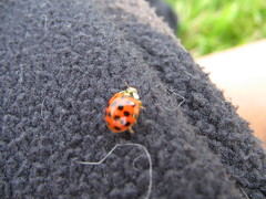 Ladybug on my jacket at Gravelly Point