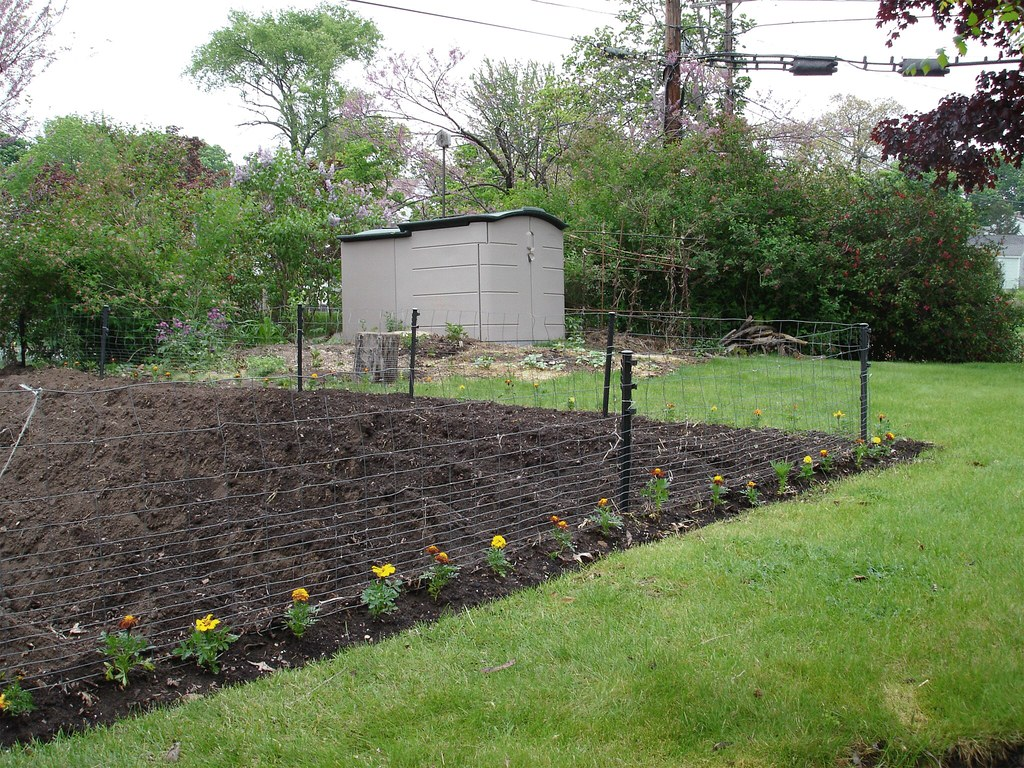 Rabbit-proof-garden? | Marigolds are supposed to keep the ra