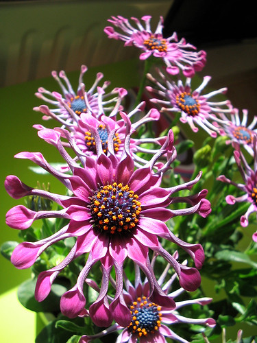 weird purple flower
