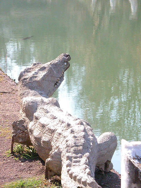 crocodile statue at canopus flickr photo sharing. Black Bedroom Furniture Sets. Home Design Ideas