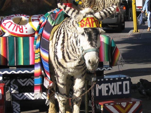 Donkey Zebra In Tj Zonkey Flickr Photo Sharing