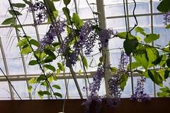 flower, branch, purple, floral design, flora, glass, spring,