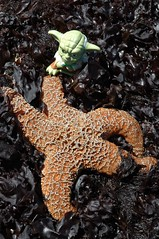 Yoda and Starfish