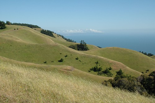 Slopes of Mt Tamalpais