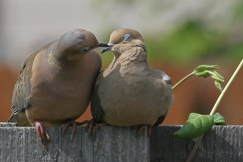 Love on the Back Fence