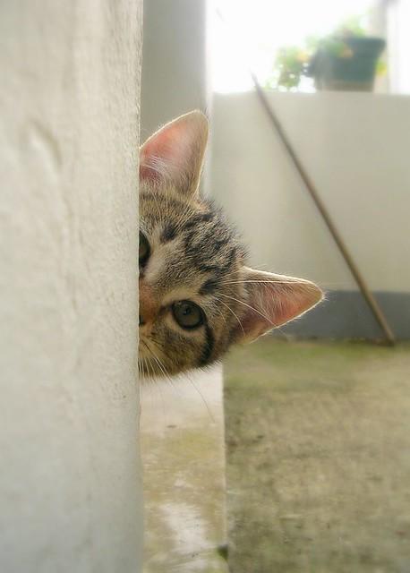 curious roy