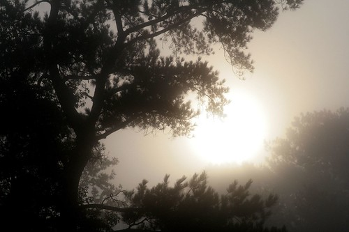 morning autumn trees tree fall nature landscape ilovenature louisiana backlit mrgreenjeans gaylon blackwaterconservationarea gaylonkeeling