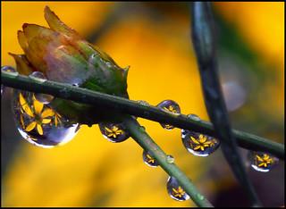 It's raining gold!