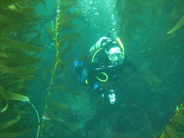 Bosque bajo el mar