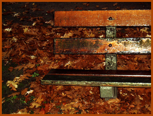 Bench in the fall rain