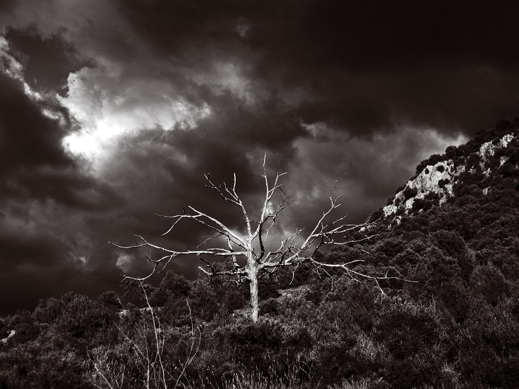 Dead tree, Cabeza del Molino. Mochales