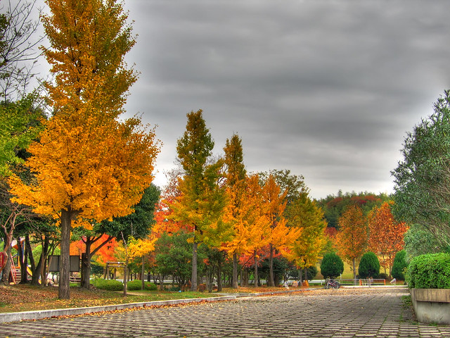 Photo:Gingko colors (HDR) By EugeniusD80