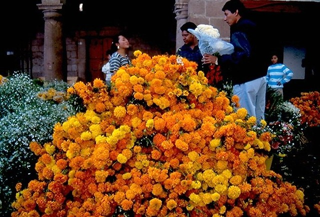 Cempasuchiles | a big pile of marigold flowers brought to ...