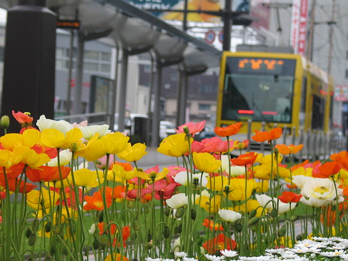 Flowers and Light Rail of Kagoshima
