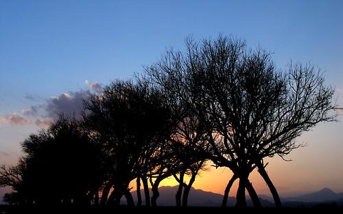 trees sunset tree silhouette iran horizon persia damghan jazan semnanprovince damghancity jazanvillage