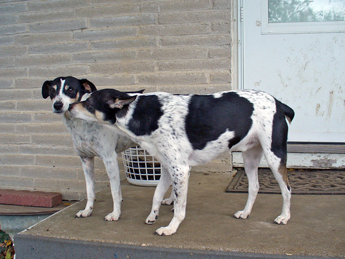 2006-10-30 - Dogs-n-Cows-0119